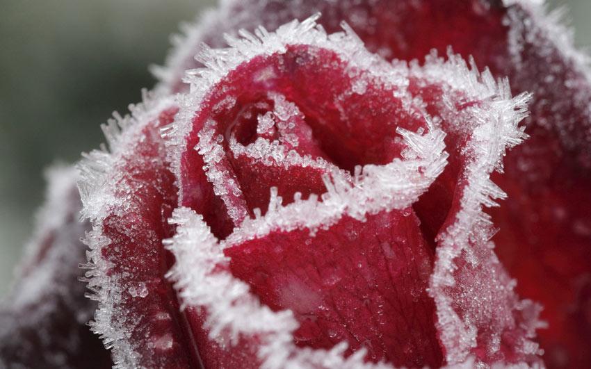 зимние-цветы-3